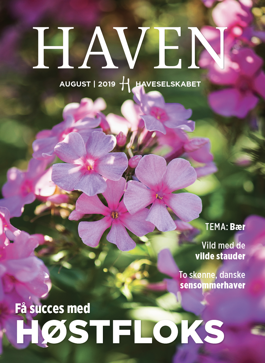 HAVEN august 2019