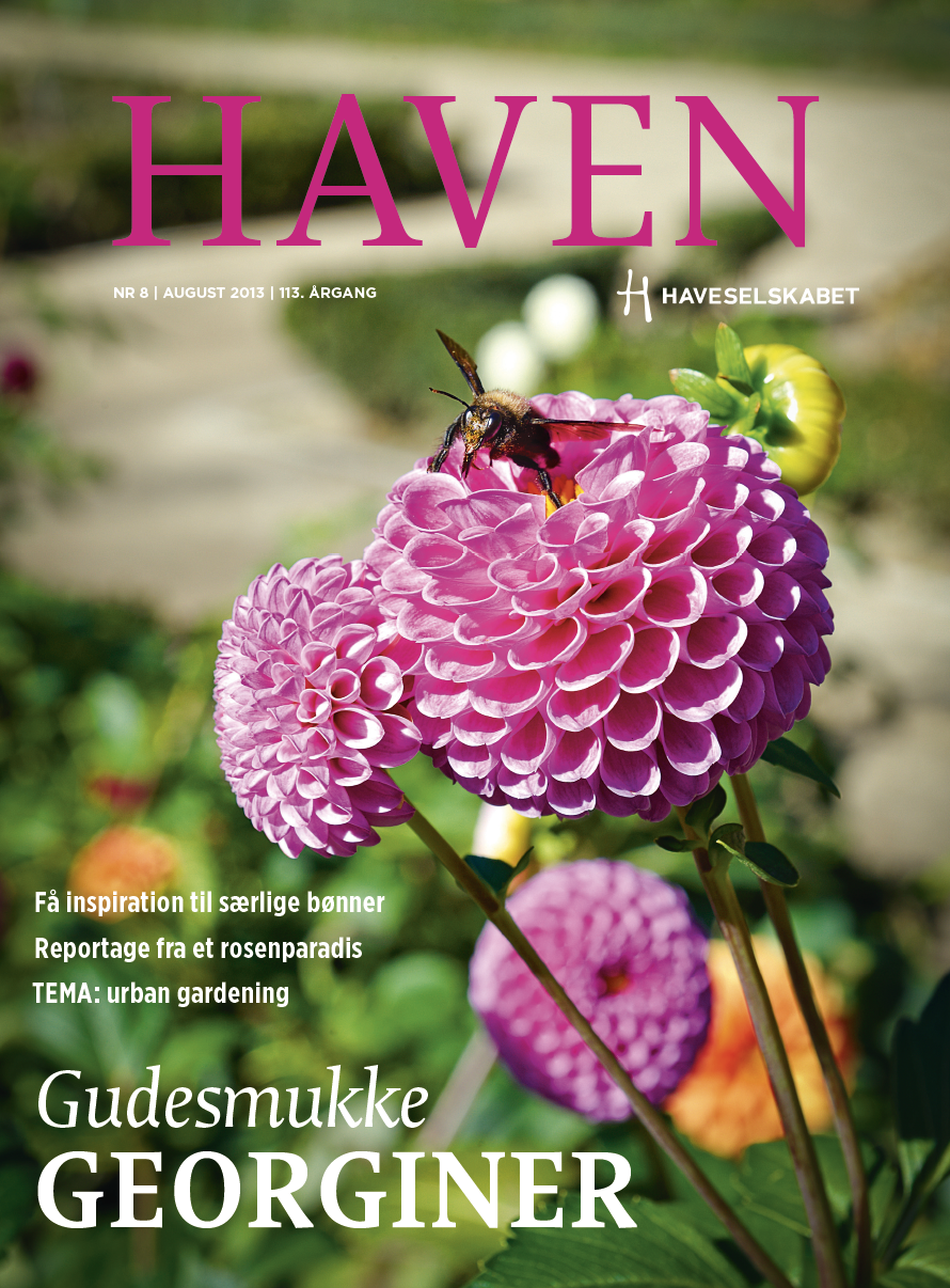 HAVEN august 2013
